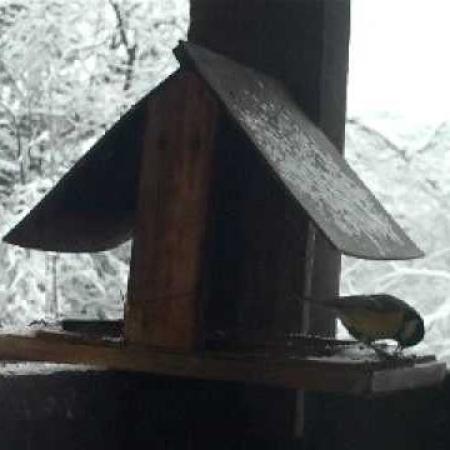 Botfai madáretető